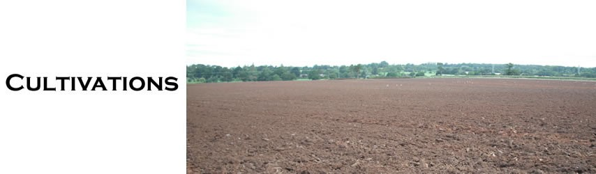 watson header - cultivations